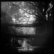 Puentes y raíces